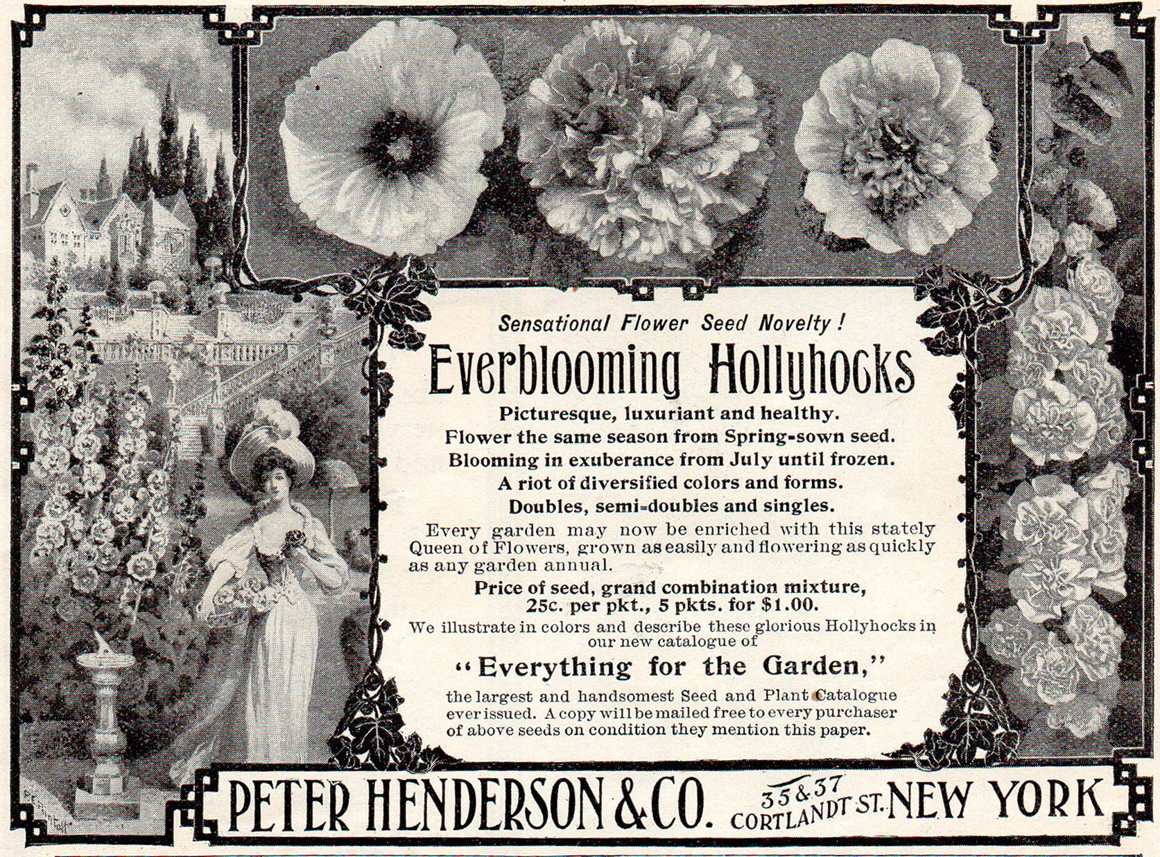 Hollyhock here described as a 'novelty' in this Harper's ad of 1888
