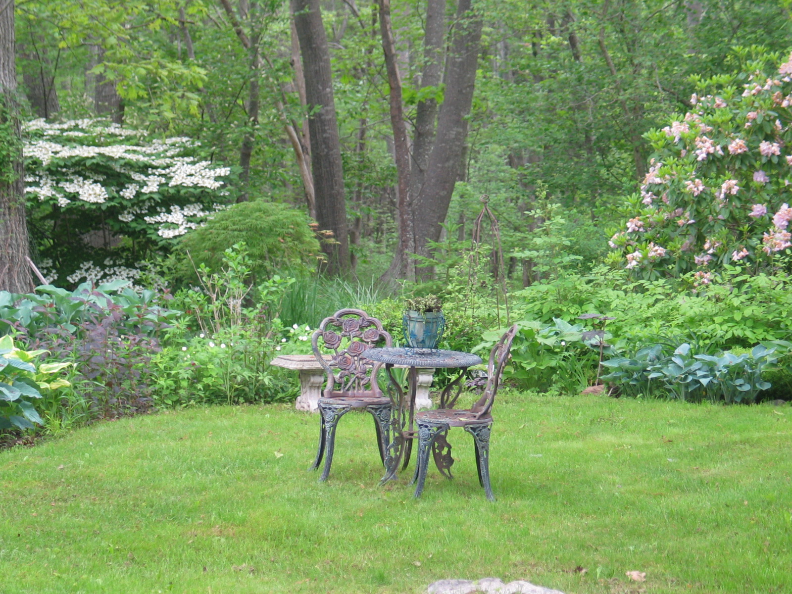 My backyard garden with wrought iron table at the center on the lawn