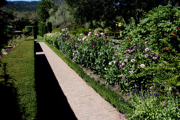 Boxwood edging at Filoli Gardens, Woodside, CA