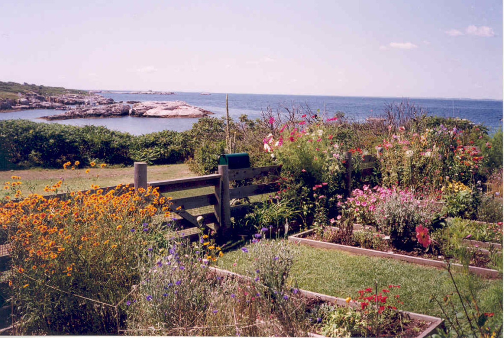 Celia Thaxter's island garden measures  50 feet by 15 feet.