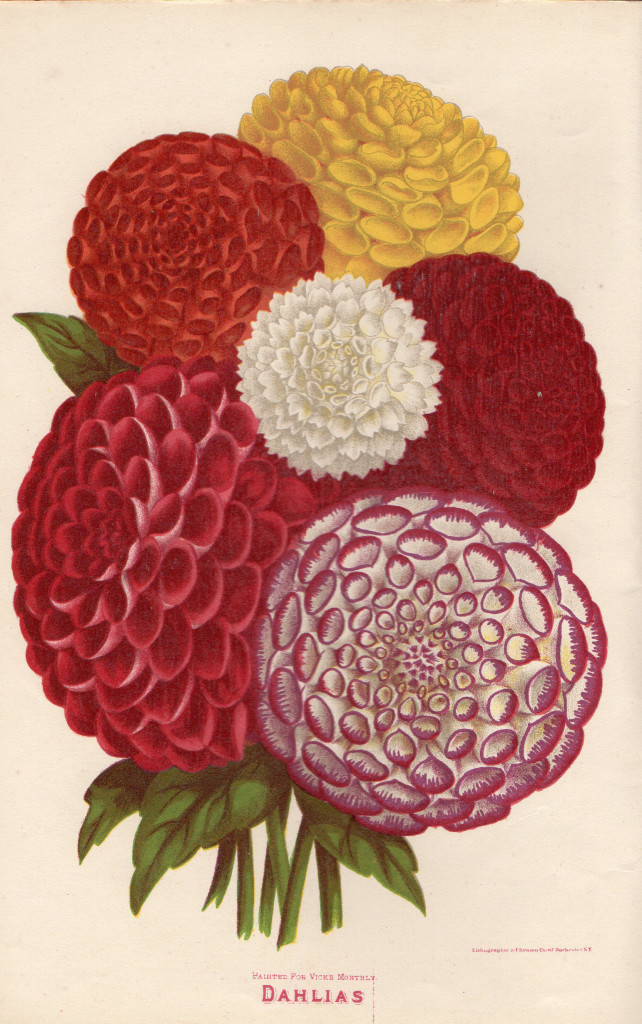 Chromolithograph from Vick's Illustrated Monthly, February 1878