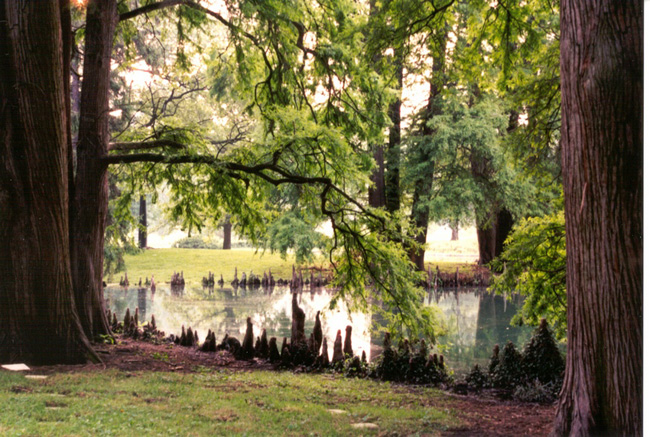 The cypress tree frames this water view in Cincinatti's Spring Grove Cemetery.