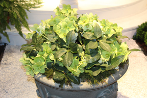 Helleborus viridis at this springs's Boston Flower and Garden Show