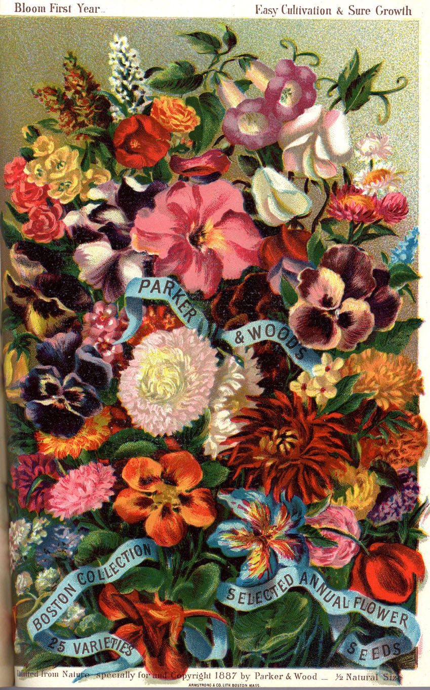 Flowers in 1887 catalog of the Parker & Wood Seed Company, Boston